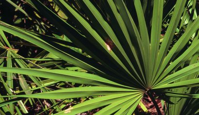 saw_palmetto-well4ever_clinic_putney
